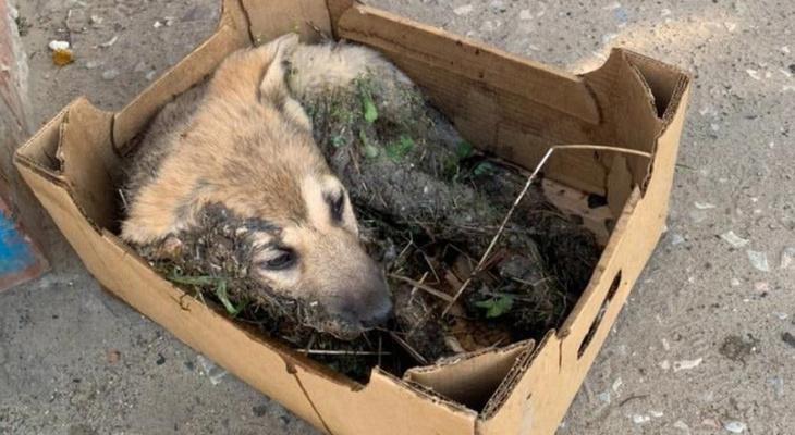 В Коми неизвестные облили щенка клеем и бросили его в лесу