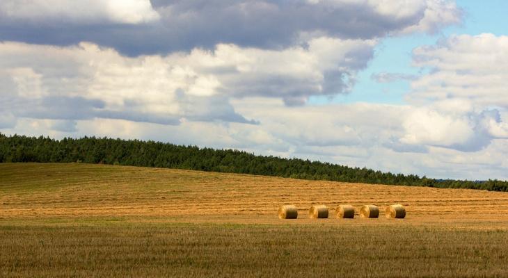 +19 и без осадков: погода в Сыктывкаре на 18 июня