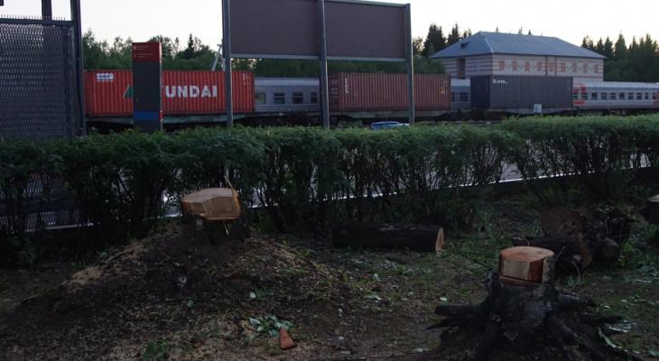 В сквере возле сыктывкарского вокзала вырубили деревья