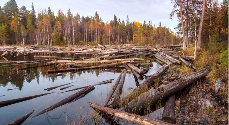 В Коми вернутся к сплаву леса вместо перевозок большегрузами