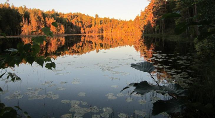 Галлюциногенный овраг, озеро без дна и проекции инопланетян: что таят в себе загадочные места Коми