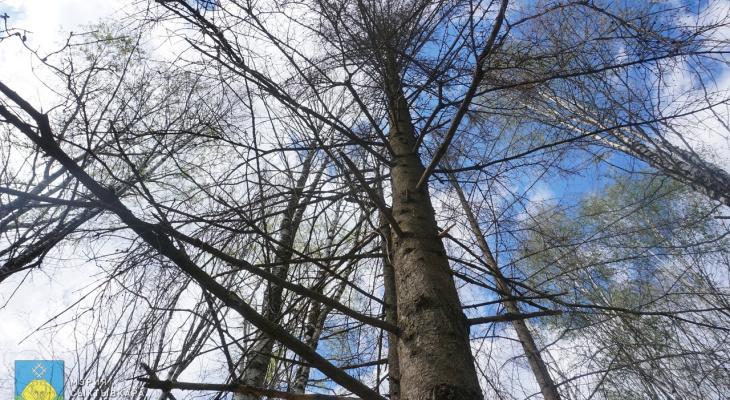 В парках Сыктывкара спилят деревья