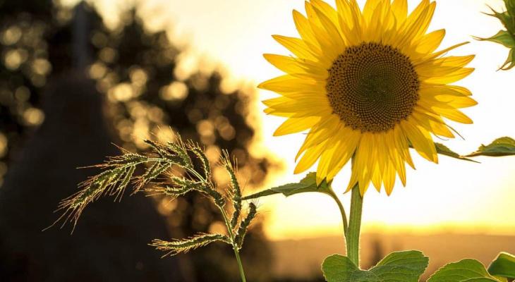 Настоящее лето: погода в Сыктывкаре на 4 августа